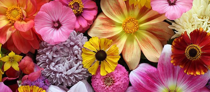 Nombres De Flores De Niñas Y Niños Y Su Significado