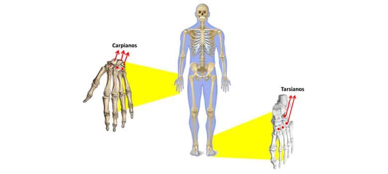 Completo Nombres Esqueleto Humano