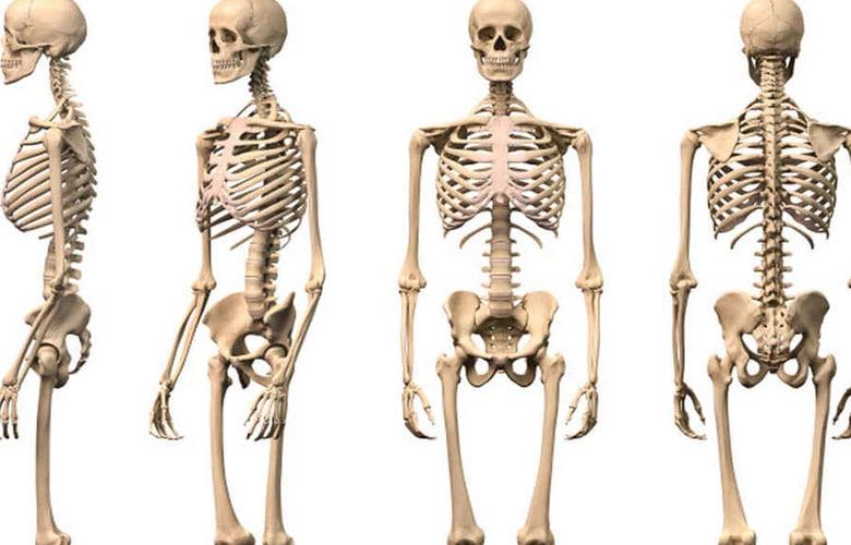 Esqueleto Humano Entero