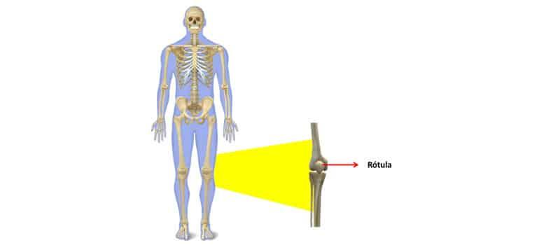 Esqueleto Humano Que Es