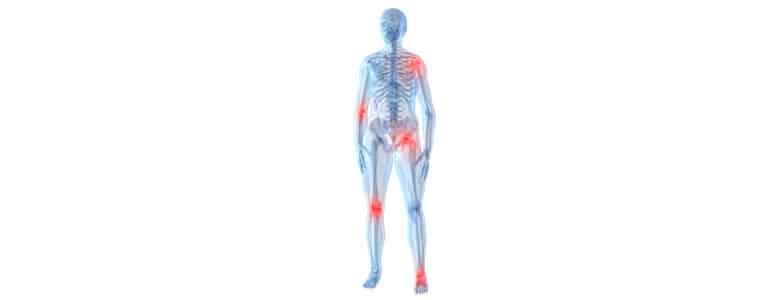 Esqueleto Humano Real