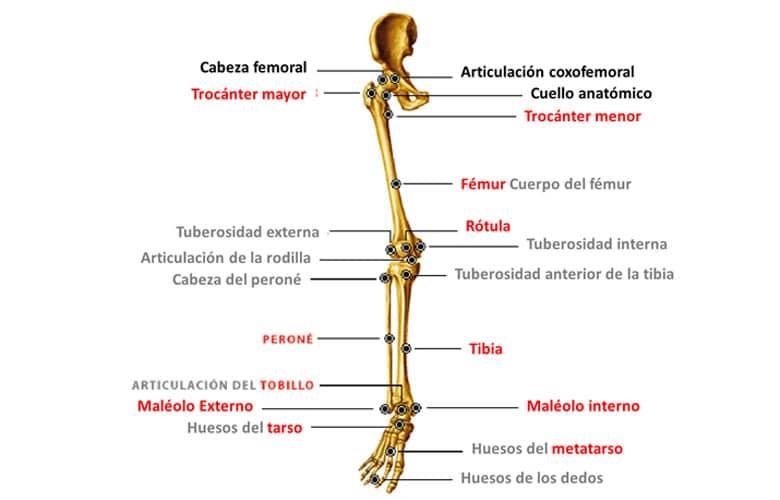 Nombre Huesos Esqueleto Humano
