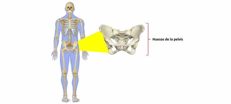 Que Es Esqueleto Humano