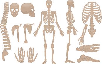 Esqueleto Humano Mini