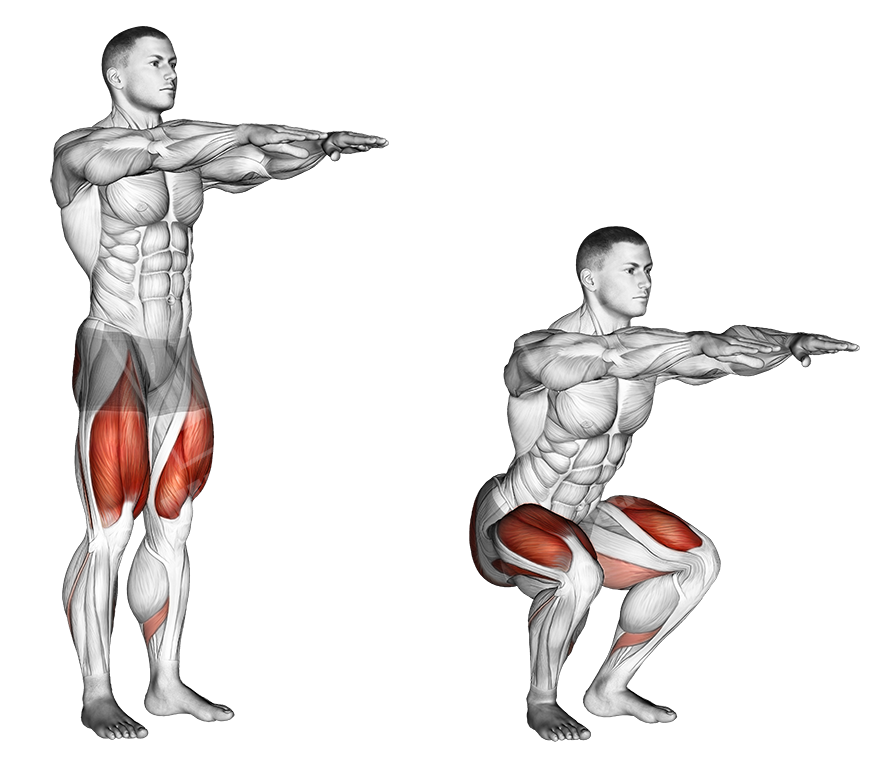 Importancia de los músculos y del sistema muscular