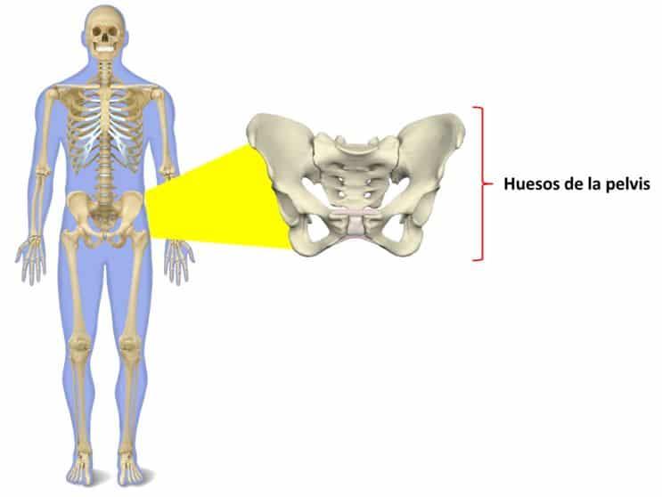 Qué son los músculos