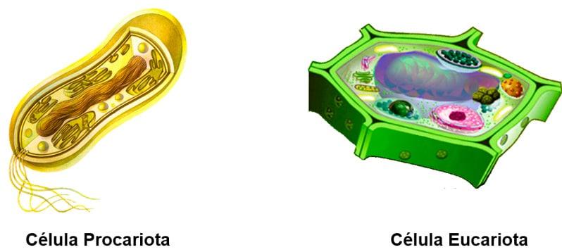 Célula procariota en primaria
