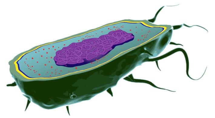 Célula procariota niños primaria