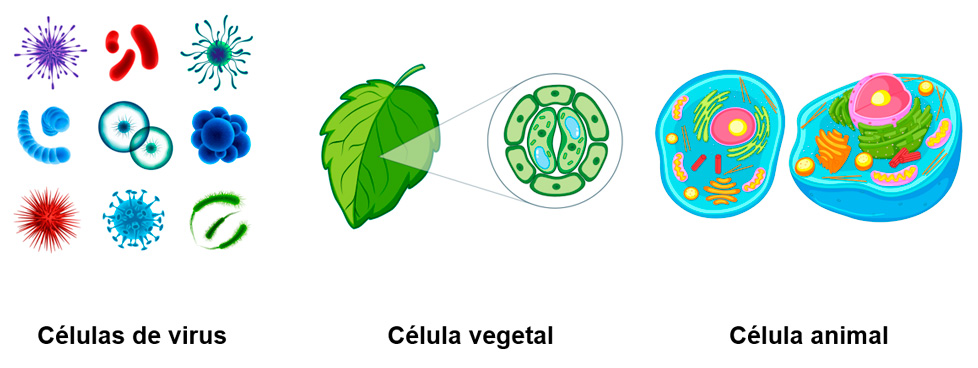 Célula procariota para niños de primaria