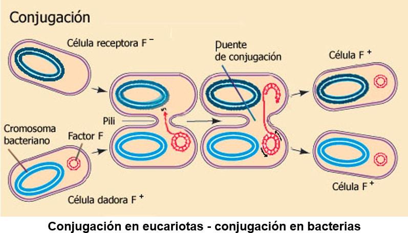 Células procariotas en primaria para niños