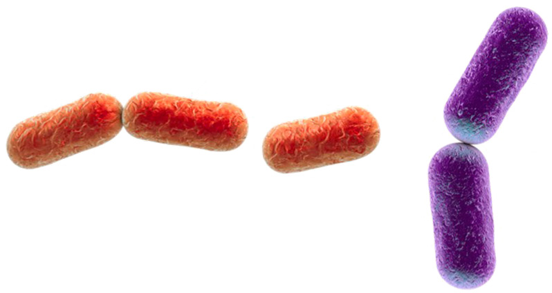 Células procariotas para niños de primaria