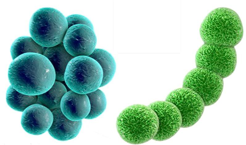 Células procariotas para niños primaria