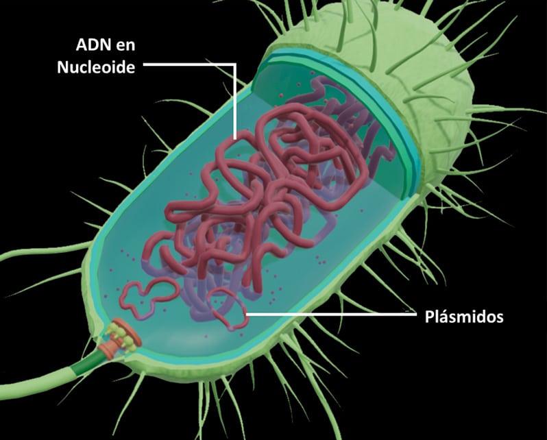 Células procariotas para niños